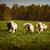honden · gouden · lopen · zomer · groene - stockfoto © goroshnikova