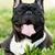 gezicht · cute · puppy · hond · hoofd · aanbiddelijk - stockfoto © goroshnikova