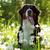 beautiful happy bernese mountain dog stock photo © goroshnikova