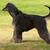собаки · группа · голову · студию · мужчины · мех - Сток-фото © goroshnikova
