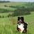mutlu · güzel · bernese · dağ · köpeği · eğlence · yaz · açık · havada - stok fotoğraf © goroshnikova