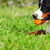 happy family dog bernese mountain dog lying on the grass in the stock photo © goroshnikova