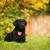beautiful little black puppy a labrador retriever stock photo © goroshnikova