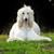 собака · гончая · белый · студию · мужчины · мех - Сток-фото © goroshnikova