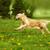 jugando · cachorros · adorable · poco · bebé · perro - foto stock © goroshnikova