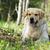 fiatal · boldog · kutya · golden · retriever · öröm · hamar - stock fotó © goroshnikova