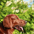 profile of the irish setter against bushes stock photo © goroshnikova