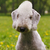 Dog Bedlington Terrier summer in the Park stock photo © goroshnikova