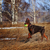 brown dog doberman in the spring stock photo © goroshnikova