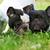 çift · köpek · yavrusu · köpekler · oturma · beyaz · sevimli - stok fotoğraf © goroshnikova