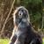 гончая · собака · белый · Постоянный · газона · зеленый - Сток-фото © goroshnikova