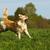 felice · cane · golden · retriever · erba · verde · esecuzione · eseguire - foto d'archivio © goroshnikova