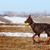 brown doberman dog playing with a ball stock photo © goroshnikova