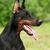 özenli · köpek · açık · havada · kar · renk - stok fotoğraf © goroshnikova
