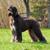 sabueso · perro · caminando · césped · verde · parque - foto stock © goroshnikova
