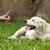eğitim · köpekler · kulüp · köpek · itaat - stok fotoğraf © goroshnikova