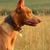 préri · kutya · mező · tavasz · idő · zöld - stock fotó © goroshnikova