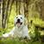 güzel · mutlu · köpek · golden · retriever · yaz · açık · havada - stok fotoğraf © goroshnikova