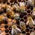 méh · keret · méz · dolgozik · méhsejt · napos · idő - stock fotó © grafvision
