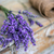 lavanda · flores · flor · textura · natureza - foto stock © grafvision