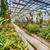 botanico · costruzione · interni · serra · complesso · fiore - foto d'archivio © grafvision
