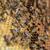 werken · bijen · honing · macro · shot · boerderij - stockfoto © grafvision