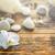 stenen · orchidee · bloem · achtergrond · steen · spa - stockfoto © grafvision