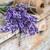 fresh lavender flowers stock photo © grafvision