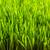 зеленый · пшеницы · зеленая · трава · весны · природы · красоту - Сток-фото © grafvision