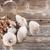 Parasol mushroom stock photo © grafvision