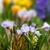 voorjaar · klein · waterval · plaats · natuur · reserve - stockfoto © grafvision