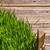 пшеницы · трава · пространстве · текста · саду · фон - Сток-фото © grafvision