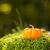 mini · narancs · sütőtök · tökök · fa · deszka · ősz - stock fotó © grafvision