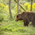 bruine · beer · witte · beer · witte · achtergrond · zoogdier · wild - stockfoto © grafvision