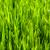 зеленая · трава · пшеницы · текстуры · весны · фон - Сток-фото © grafvision