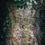bluszcz · drzewo · kory · charakter · liści · tle - zdjęcia stock © grafvision