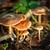 groep · champignons · vergiftige · paddestoel · bos · magie · mooie - stockfoto © grafvision