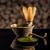 té · bambú · batidor · cuchara · japonés · ceremonia - foto stock © grafvision