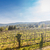 mooie · wijngaard · landschap · bewolkt · hemel · vers - stockfoto © grafvision