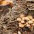 菌 · ツリー · 木材 · 風景 · 光 · グループ - ストックフォト © grafvision