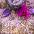 lavanta · natürmort · iki · bronz · Metal · baharat - stok fotoğraf © grafvision