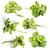 kulinarny · oddziału · pietruszka · beżowy · nóż - zdjęcia stock © grafvision