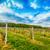 jonge · zaailingen · wolken · zonsondergang · landschap - stockfoto © grafvision