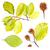 noix · feuille · fruits · noix · vert · laisse - photo stock © grafvision