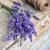 лаванды · свежие · Cut · вместе · антикварная · ножницы - Сток-фото © grafvision