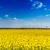 vent · fermes · domaine · ciel · bleu · énergie · pouvoir - photo stock © grafvision