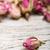 aszalt · rózsa · száraz · rózsaszín · virág · izolált · fehér - stock fotó © grafvision