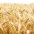 области · зерна · подробный · мнение · небе · продовольствие - Сток-фото © grafvision