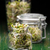 glas · mosterd · witte · voedsel · graan · Spice - stockfoto © grafvision