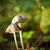 bos · champignons · buitenshuis · shot · najaar · magie - stockfoto © grafvision